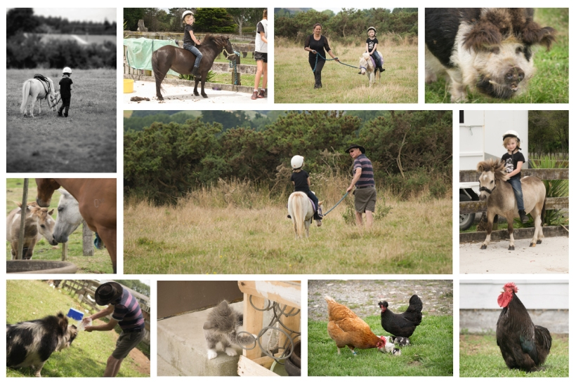 collage horse riding
