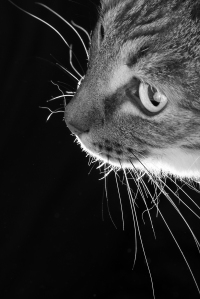 MAR16 OPEN PRINT - Whiskers - Highly Commended