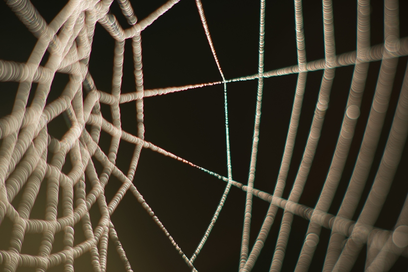 Abstract web
